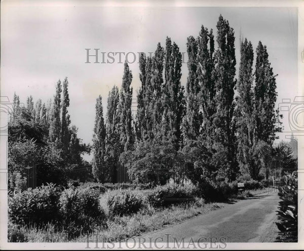 1953 Press Photo Famous popular drive in Glenmorrie lines road from Willamette - Historic Images