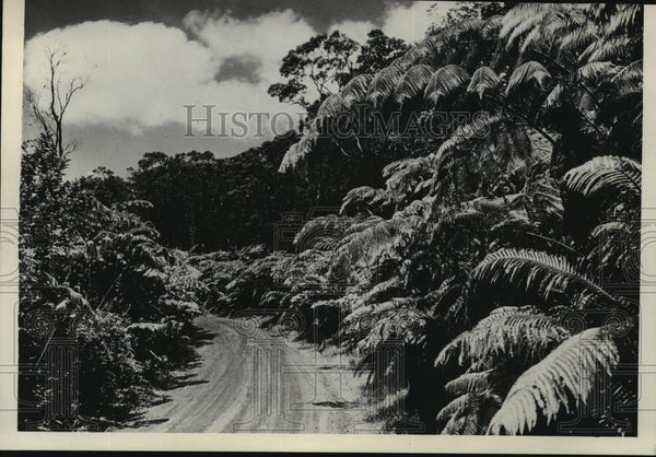 1934 Press Photo Fern Jungle-Road to Kilauea Volcano, Big Island of Hawaii - Historic Images