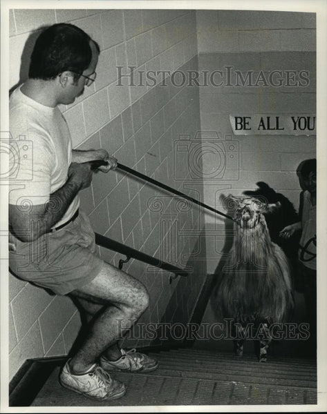 1992 Press Photo Larry Fiske Leading Llamas into Burleigh Elementary School - Historic Images