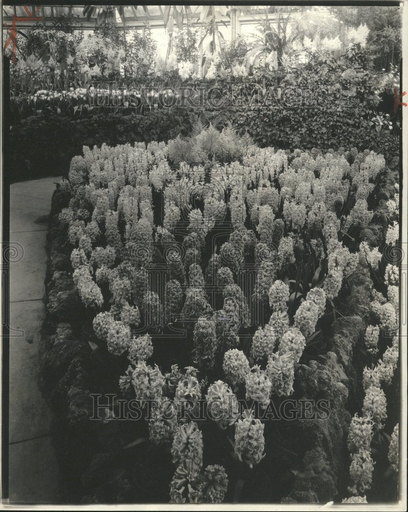 1927 Hyacinth Plant Flower Belle Isle Park - Historic Images
