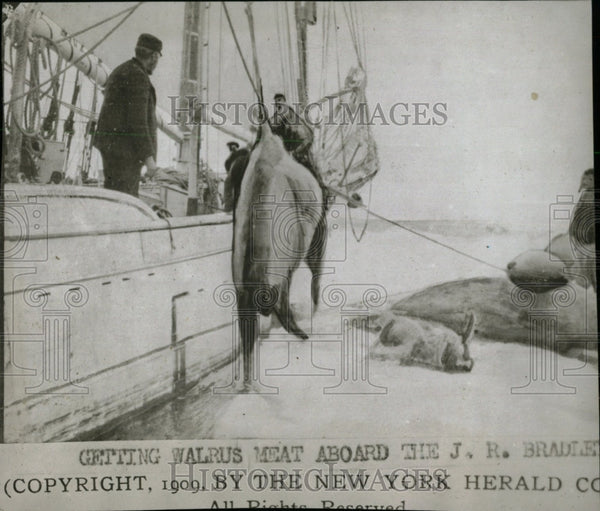 1909 Press Photo Walrus Hunting/Boat/Sailing - RRW78221 - Historic Images