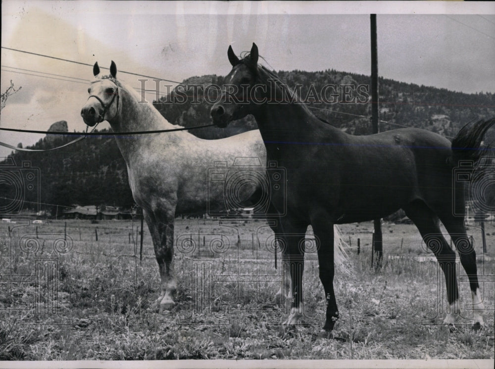 1958 Press Photo Synbad and Lallegra Champion Horses - RRW86457 - Historic Images