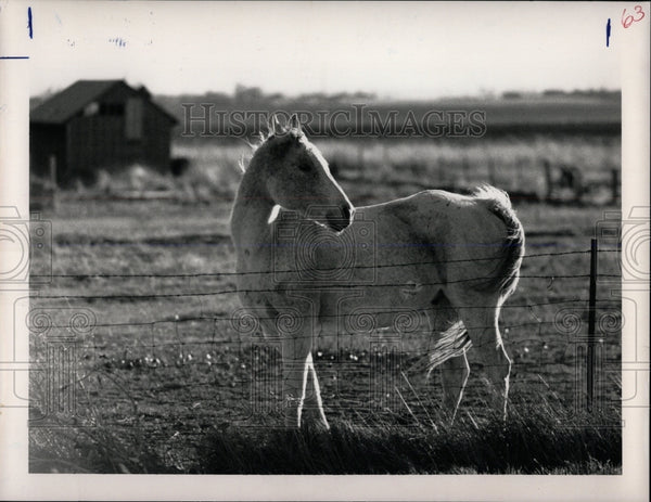 1980 Press Photo A horse in a pasture along State Highw - RRW86477 - Historic Images