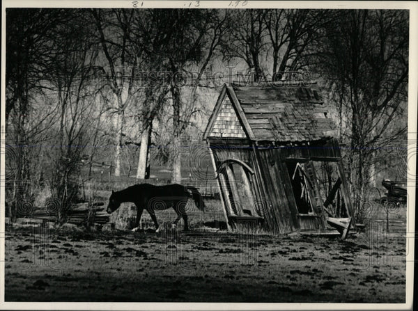 1987 Press Photo Horse standing next to a old shed. - RRW86479 - Historic Images