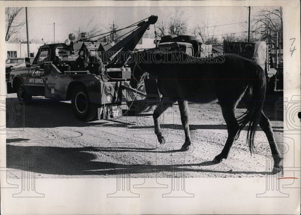 1970 Press Photo Horse being towed by Bob's Auto Servic - RRW86515 - Historic Images