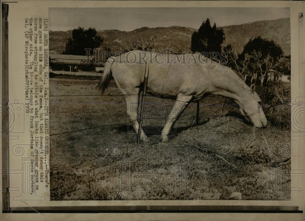 1970 Press Photo Horses Looking For Something to Nibble - RRW86521 - Historic Images