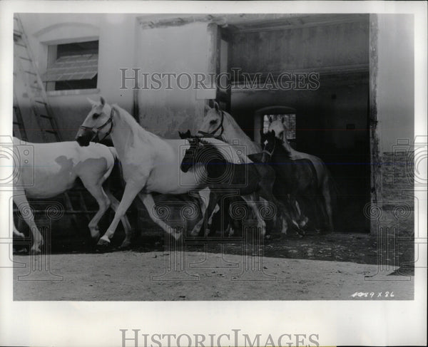 None Nobel Steed Join Hollywood List Star Florian Emble - RRW86559 - Historic Images