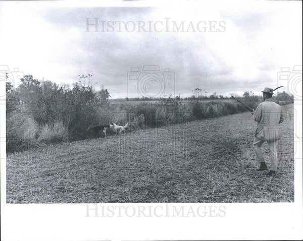 1968 Press Photo Hunting Pheasants Pebe Island - Historic Images