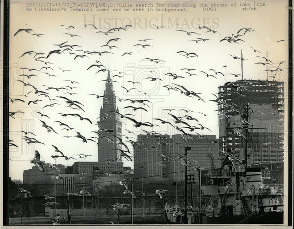 1974 Press Photo Seagulls Lake Erie Cleveland Tower - Historic Images