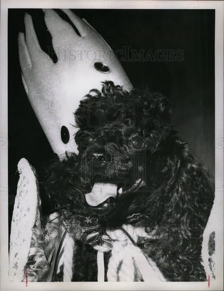1967 Press Photo Poodle Parade Little Angelina - Historic Images