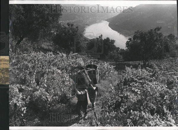 1978 Press Photo Portuguese workers carry the harvest - Historic Images