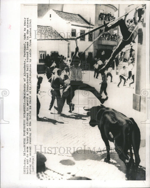 1965 Press Photo Alcochete Portugal fancy wire horned bull Scrambull Annual - Historic Images