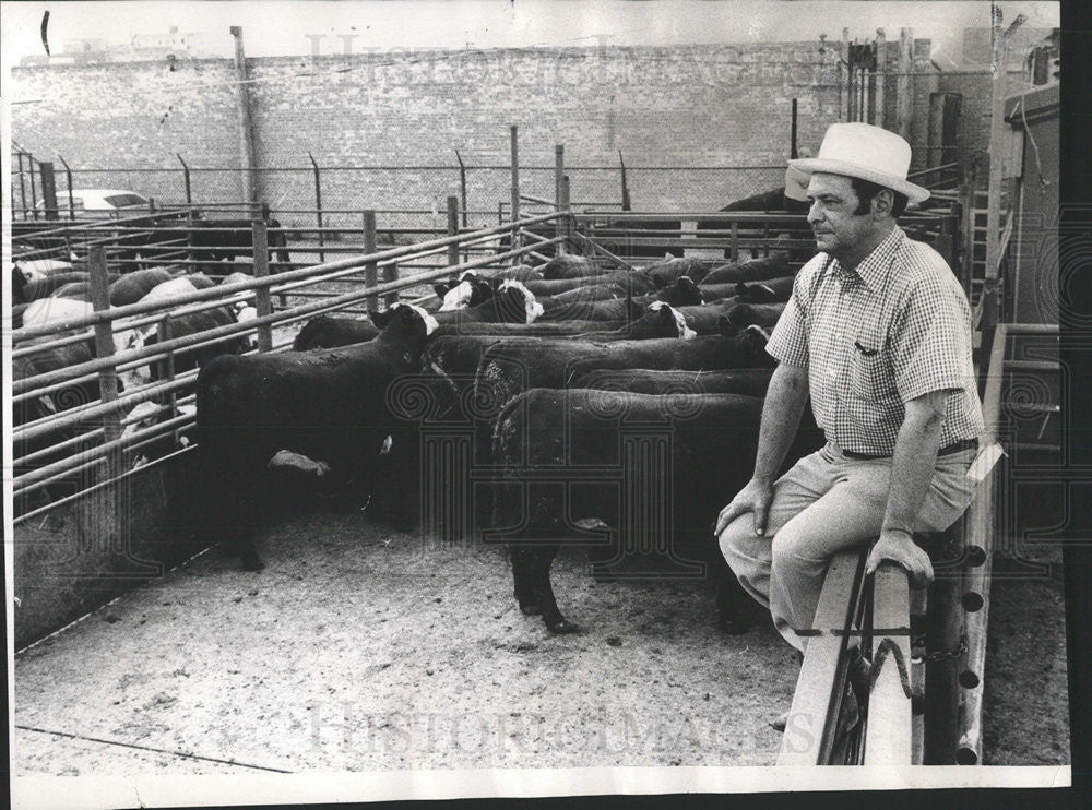 1973 Press Photo Walter Mander of Lincoln Meat Co.with cattle - Historic Images
