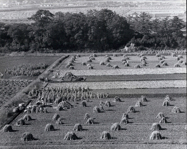 Press Photo Agriculture japan vegetable cultivation - Historic Images