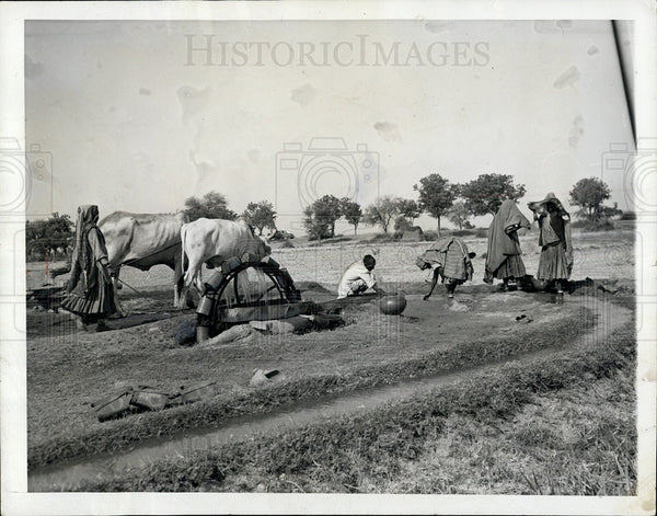 1964 Press Photo Farming and irrigation in India - Historic Images