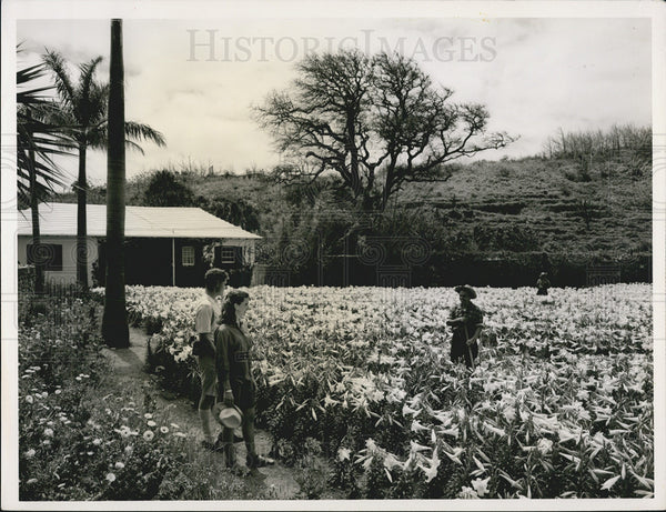 Press Photo Couple & Farmer Flower Field Tourist Valley Nature Agriculture Farm - Historic Images