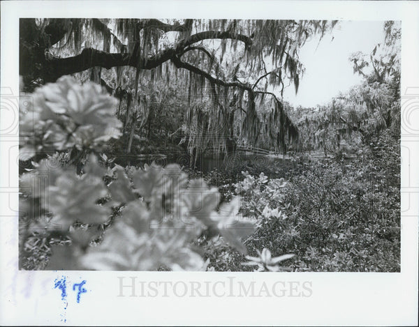 Press Photo South Carolina Gardens floral bloom - Historic Images