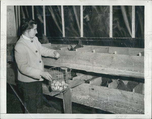 1942 Press Photo A woman collecting eggs from hens - Historic Images