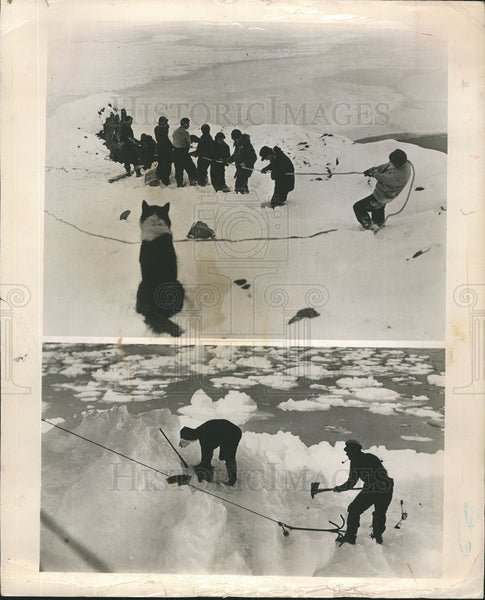 1956 Press Photo British Commonwealth Trans Antartic Expedition. - Historic Images