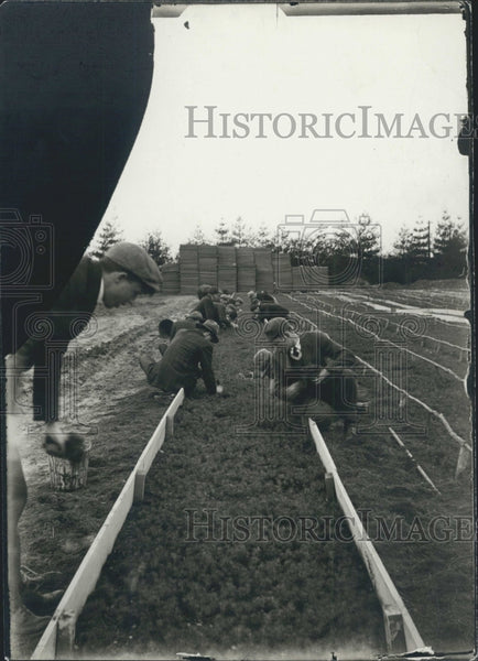 Press Photo Michigan Forests Nursery - Historic Images