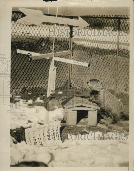 1939 Press Photo Mr Groundhog - Historic Images