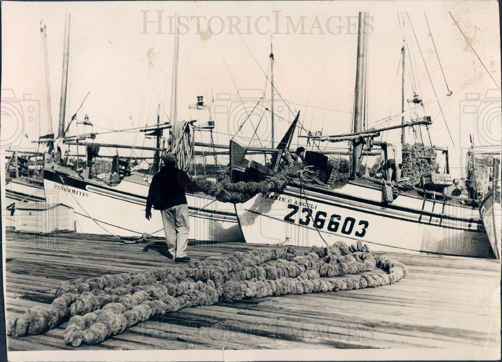 1954 Tarpon Springs Florida Sponge Boats Press Photo - Historic Images