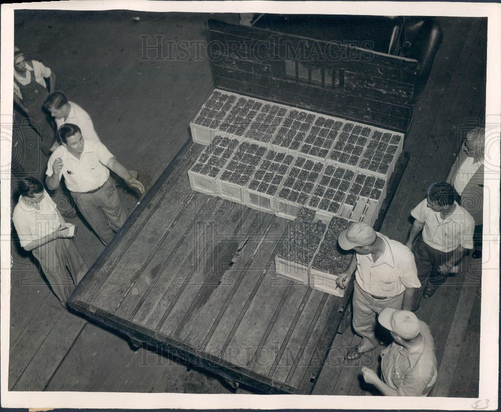 1952 Florida Strawberry Auction Winter Strawberry Auctioneer Press Photo - Historic Images