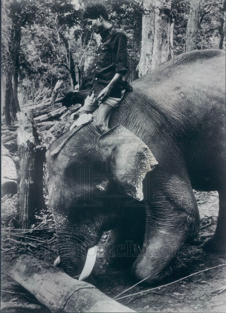 1967 India Trained Elephant Moving Logs Press Photo - Historic Images