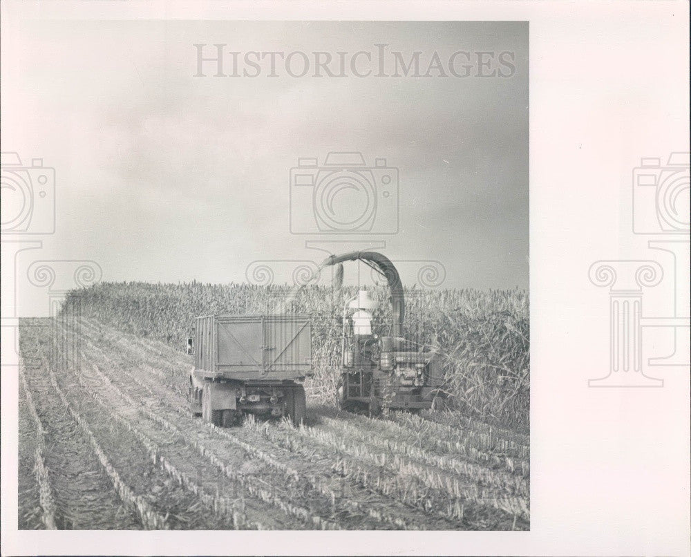 Undated Harvesting Sorghum Press Photo - Historic Images