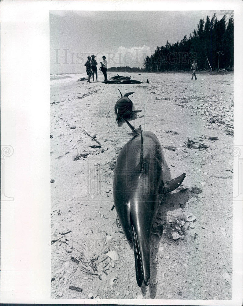 1976 Casey Key, Florida Beached Dolphins Press Photo - Historic Images