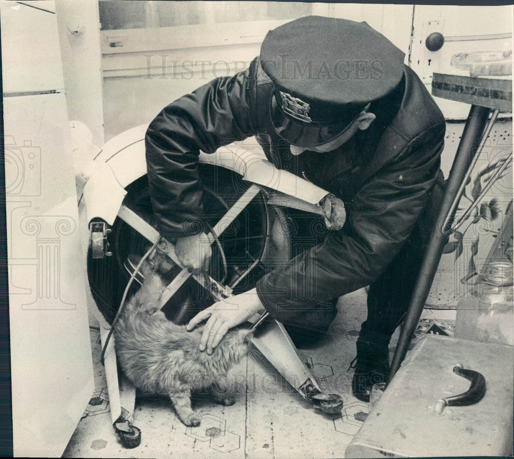 1965 Chicago, Illinois Cat Trapped in Washing Machine Press Photo - Historic Images
