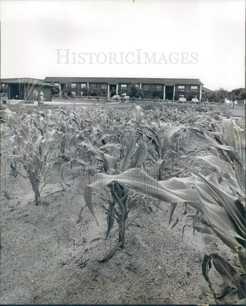 1978 Inverness, Florida Inverness Village Condos Corn Field Press Photo - Historic Images