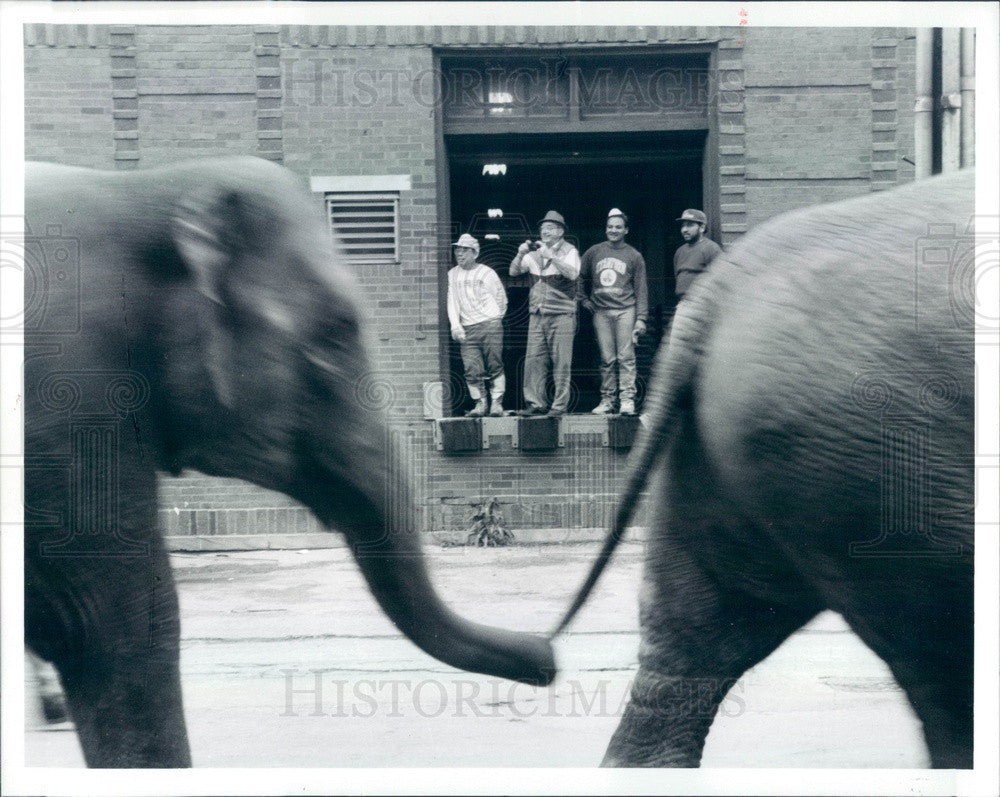 1993 Ringling Bros Barnum & Bailey Circus Elephants Press Photo - Historic Images