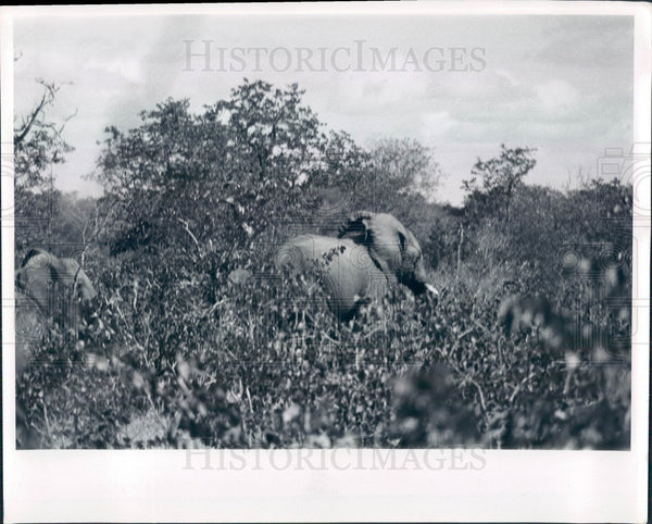 1999 Africa, Elephants Press Photo - Historic Images
