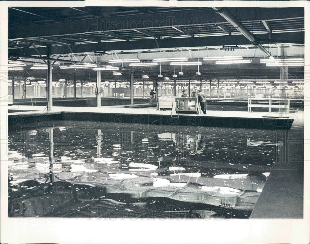 1964 Chicago, IL North Side Water Filtration Plant, Settling Basins Press Photo - Historic Images