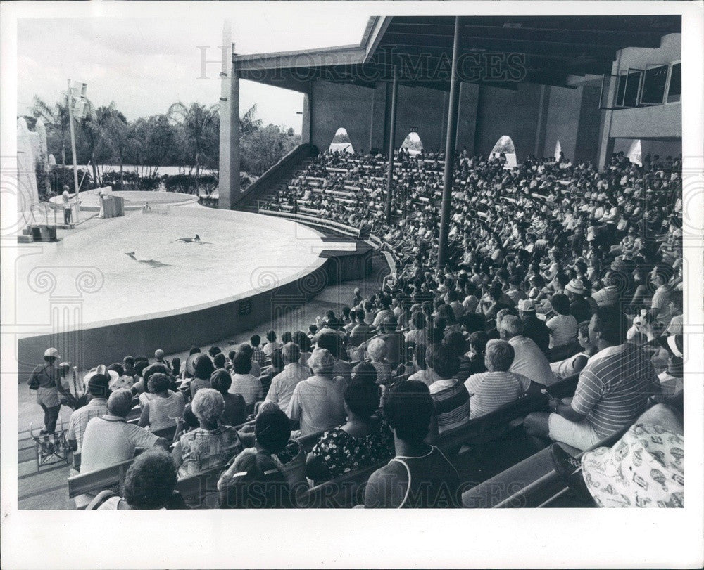1979 Tampa, Florida Busch Gardens Dolphin Show Press Photo - Historic Images