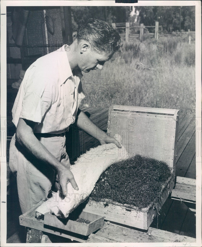 1947 Processed Moss Used In Upholstered Furniture Press Photo - Historic Images