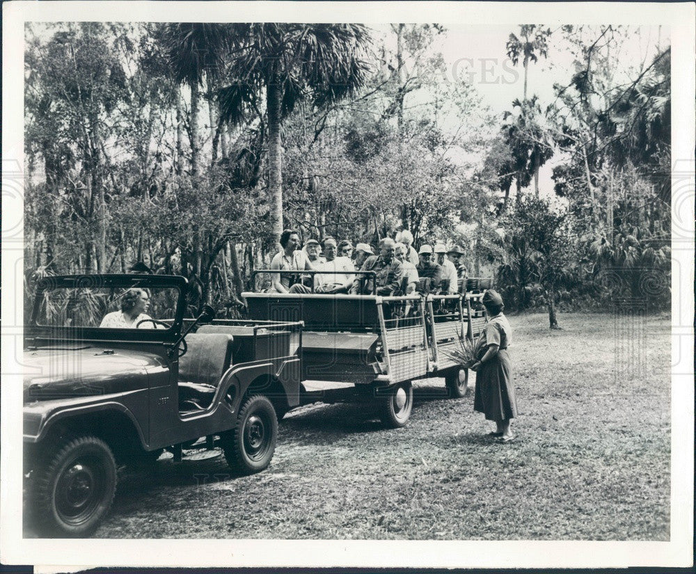 1961 Sebring, Florida Highlands Hammock State Park Press Photo - Historic Images