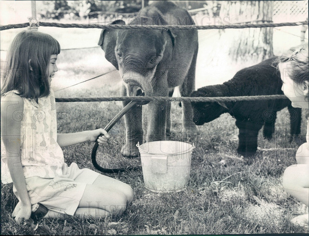 1966 Barrington, Illinois Country Fair Baby Elephant, Black Lamb Press Photo - Historic Images