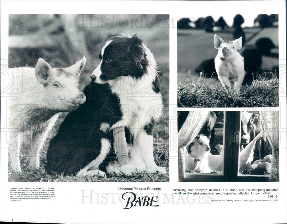 1995 Universal Pictures Moive Babe Press Photo - Historic Images
