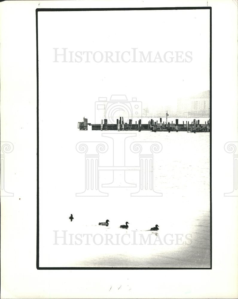 1986 Press Photo Ducks belle isle pond - Historic Images