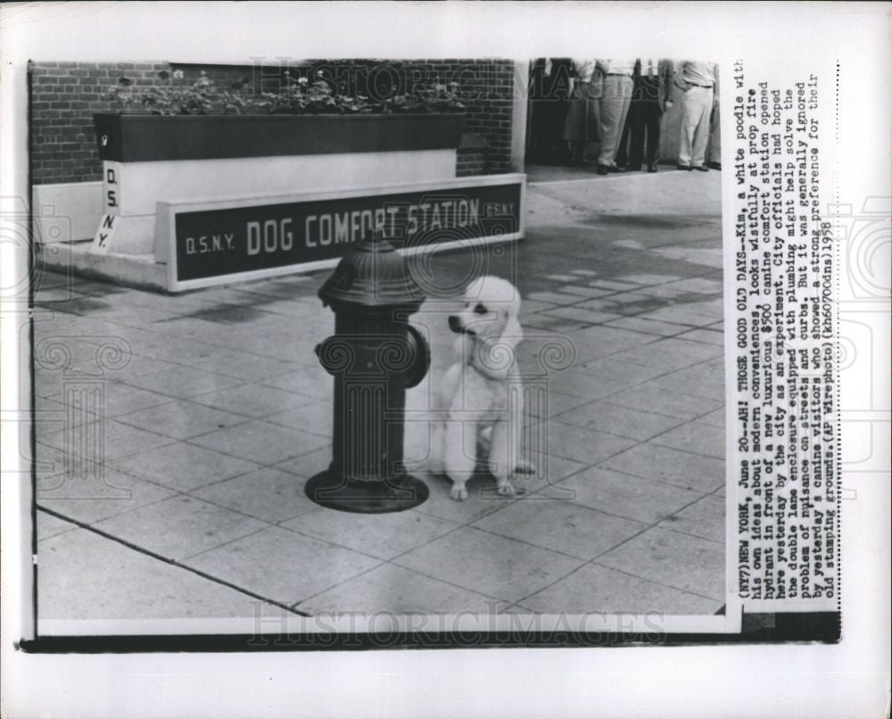 1958 Press Photo Kim poodle canine comfort station - Historic Images