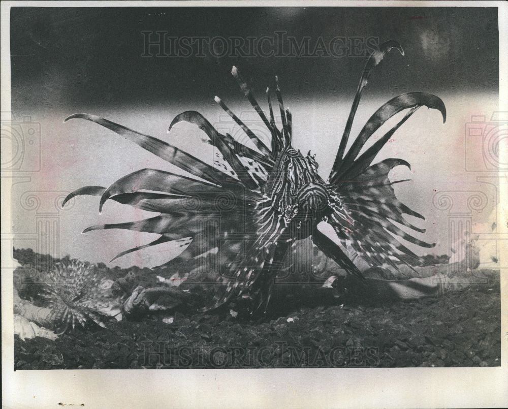 1974 Press Photo Lion Fish Southland Mall Taylor - Historic Images