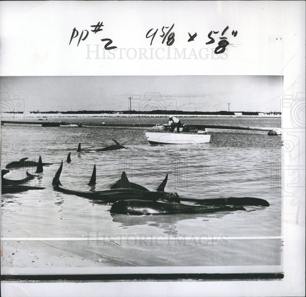 1957 Press Photo fish beach - Historic Images
