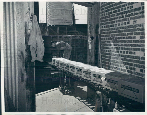 1937 Press Photo canned sardine assembly line - Historic Images