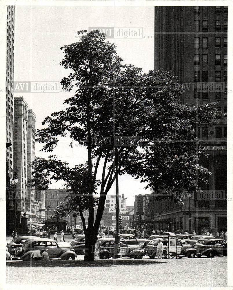 1939 Press Photo Detroit Historical Chestnut trees - Historic Images