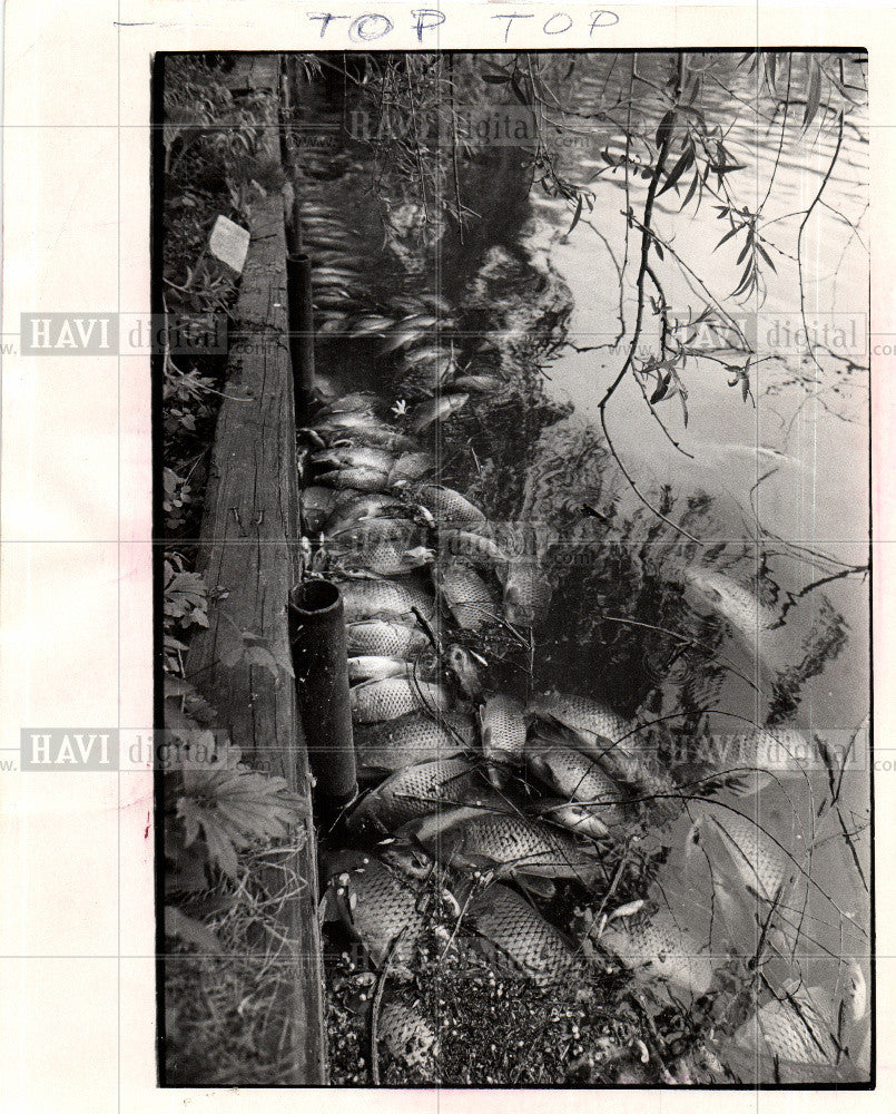 1973 Press Photo Belleville Lake Fish Dead Wayne County - Historic Images