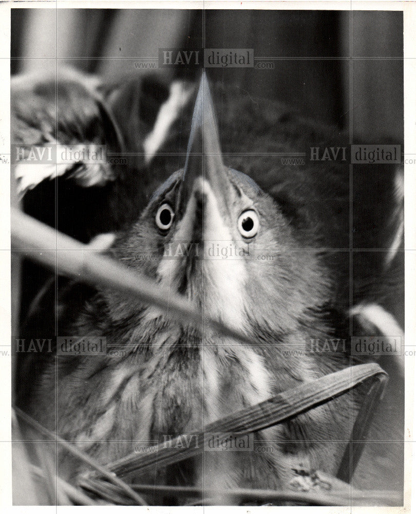 1959 Press Photo Bitters, bird - Historic Images