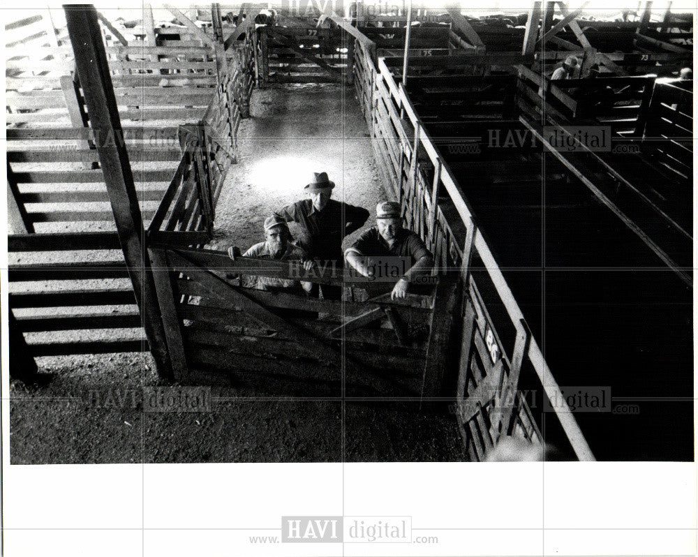 1979 Press Photo cattle auction - Historic Images