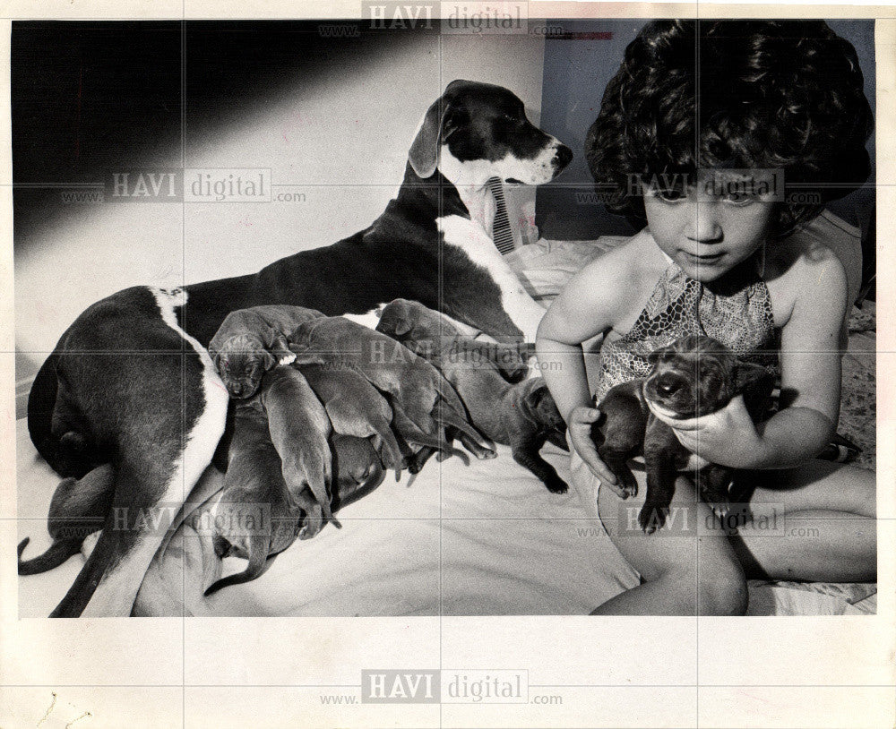 1974 Press Photo DOG GREAT DANE - Historic Images